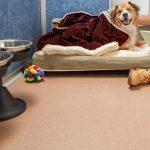 Dog in a Morris Animal Inn Luxury Suite