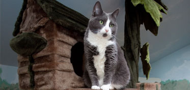 Cat in deluxe condo