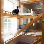 Cat in a luxury boarding suite at Morris Animal Inn