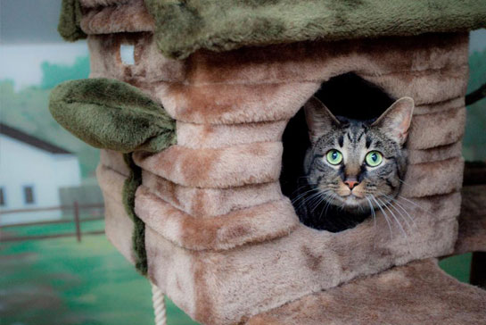 Cat inside a cat house