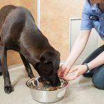Staff member feeding a dog