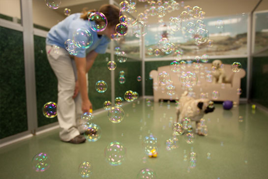 Staff blowing bubbles for a pug