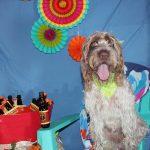 dog celebrating summer