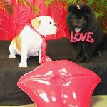 2 dogs in a valentine's day photo