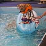 dog on a floatie in a pool