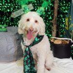 dog dressed up as a leprechaun