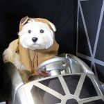 dog in a pilot's costume in a toy plane