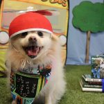 dog dressed up to celebrate back to school
