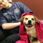 morris animal inn groomer toweling off a dog