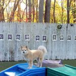 dog standing on a slide