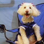 dog dressed up as a cheerleader