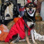 dog wearing a flapper costume