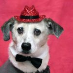 dog wearing a small, red, sequined hat
