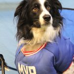 dog dressed up as an MVP