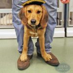 dog wearing a small sombrero