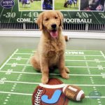 dog posing with a football