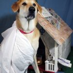 dog wearing a toga