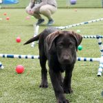 Dog playing on an obstacle course