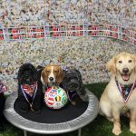 dogs posing with their olympic medals