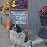 dog celebrating it's birthday at Morris Animal Inn