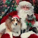 dog and cat posing with Santa Claus