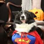 dog dressed up as superman