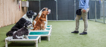 Dogs in manners training